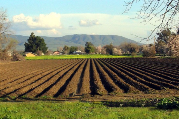 campi-coltivati-jpg-crop-displayAEA7DEAD-2CB4-2843-1EB7-86C897B4DA7A.jpg